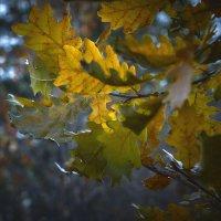 Запомнить эту осень ... :: андрей