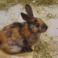 Разноцветный кролик. :: Татьяна Помогалова