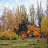 Краски осени... :: Сергей Порфирьев