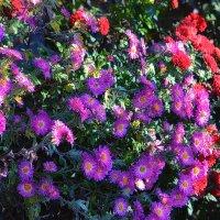 Осень такая красавица и модница :: Роза Бара