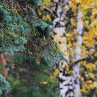 ...тихо бродит осень. :: Юрий Гайворонский