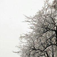 Снежная осень. :: Ирина