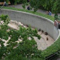 В Берлинском зоопарке :: Алёна Савина