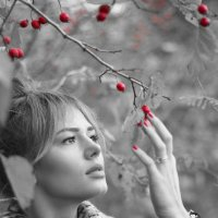Красные ягоды :: Михаил Онипенко