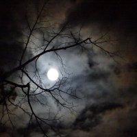 Ночь осенняя... :: Юрий Владимирович 34