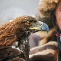 Eagle Eye :: Влад Соколовский