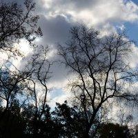 Облака... :: Михаил Болдырев