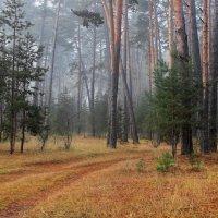 В лесах запахло хвойным тленом... :: Лесо-Вед (Баранов)
