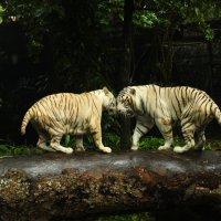 белые тигры :: Анна Бушуева