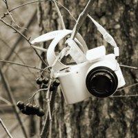 Фотокамера на ветке :: Aнна Зарубина