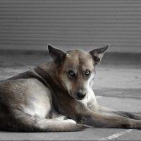 Не очень злая собака... :: Сергей Порфирьев