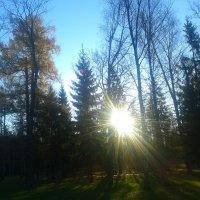 Осенний день :: Сапсан