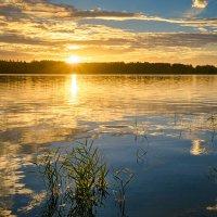 Солнечное утро. :: Наталия Горюнова