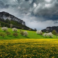 когда цветут сады :: Elena Wymann