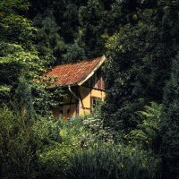 Домик в лесу. :: Van Dok