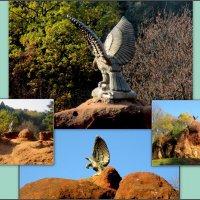 Орёл в  Кисловодском курортном парке :: Нина Бутко