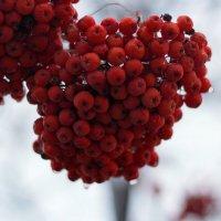 Осенние мотивы... :: Анна Шишалова