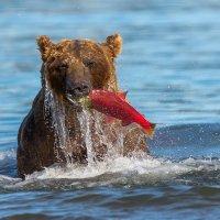 Из под воды :: Денис Будьков