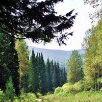 дорога в лесу :: vladimir polovnikov