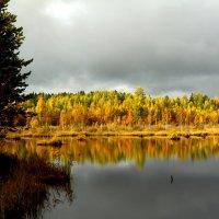 Ленинградский осенний лес :: Виктория Левина