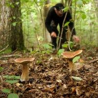 Ждут грибников своих грибы... :: Елена Kазак