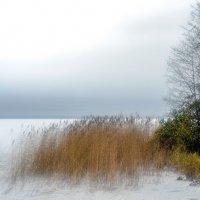 Первый снег :: Valerii Ivanov