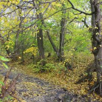 Ноябрь в парке :: оксана косатенко