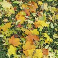 Осенние листья :: Дмитрий Никитин