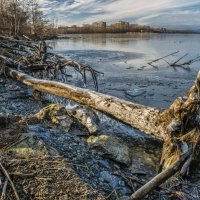 cold November/ холодный ноябрь :: Dmitry Ozersky