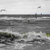 Бурлит и пенится волна, и чайки мечутся над морем :: Маргарита Батырева