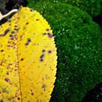 Осенний лист и мох :: Татьяна Королёва