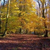 Осенний лес :: Nina Yudicheva