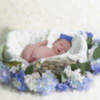 Фотосессия новорожденного. :: Ольга Петруша