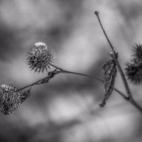 зимние цветы :: Елена Черненко