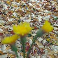 Философия опавших листьев: :: Алекс Аро Аро
