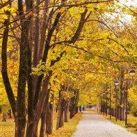 Осенний парк :: Павел Руденко