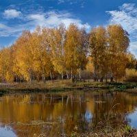 Осень золотая :: Oleg S