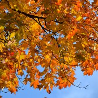 Осень золотая... :: НАТАЛИ natali-t8