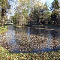 Осенний пруд :: veera (veerra)