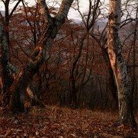 Освещённые закатом. :: Сергей