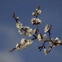О весне :: Владимир Стаценко