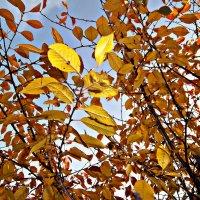 Жёлтая листва :: Татьяна Королёва