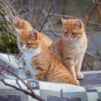 Осенние кошки :: Александр Гапоненко