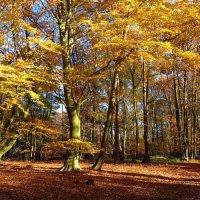 Золотой лес :: Nina Yudicheva