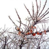 Сладка ягода :: Марина Шанаурова (Дедова)