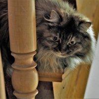 кошка :: Leonid Voropaev