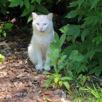 Кошка у ресторана :: Вера Щукина
