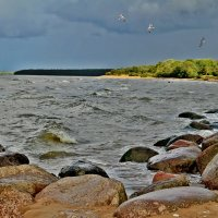 На берегу финского залива :: Marina Pavlova