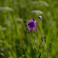 Первые цветы :: Aleksandr Ivanov67 Иванов