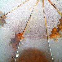 Прогулки под зонтом :: Андрей Заломленков